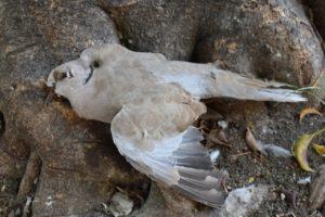 herfst, De duif is dood
